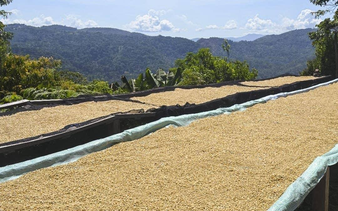 Proceso de tostaduría del café
