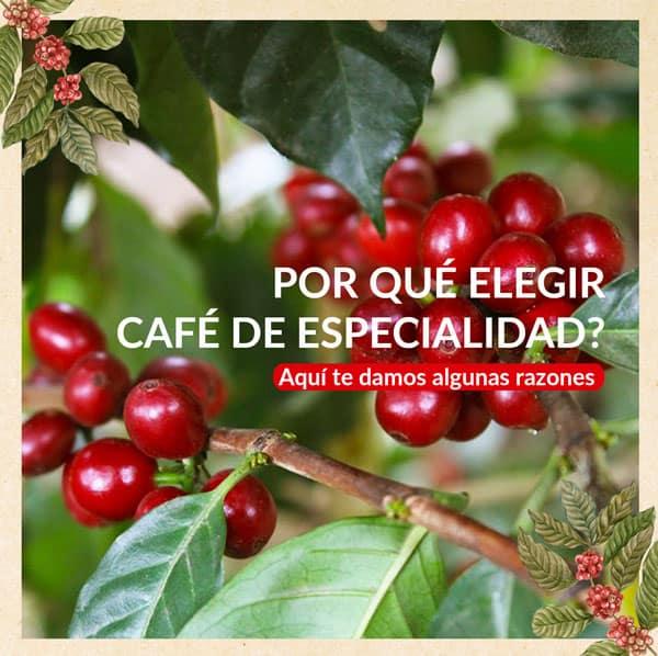 PORQUE ELEGIR CAFÉ DE ESPECIALIDAD